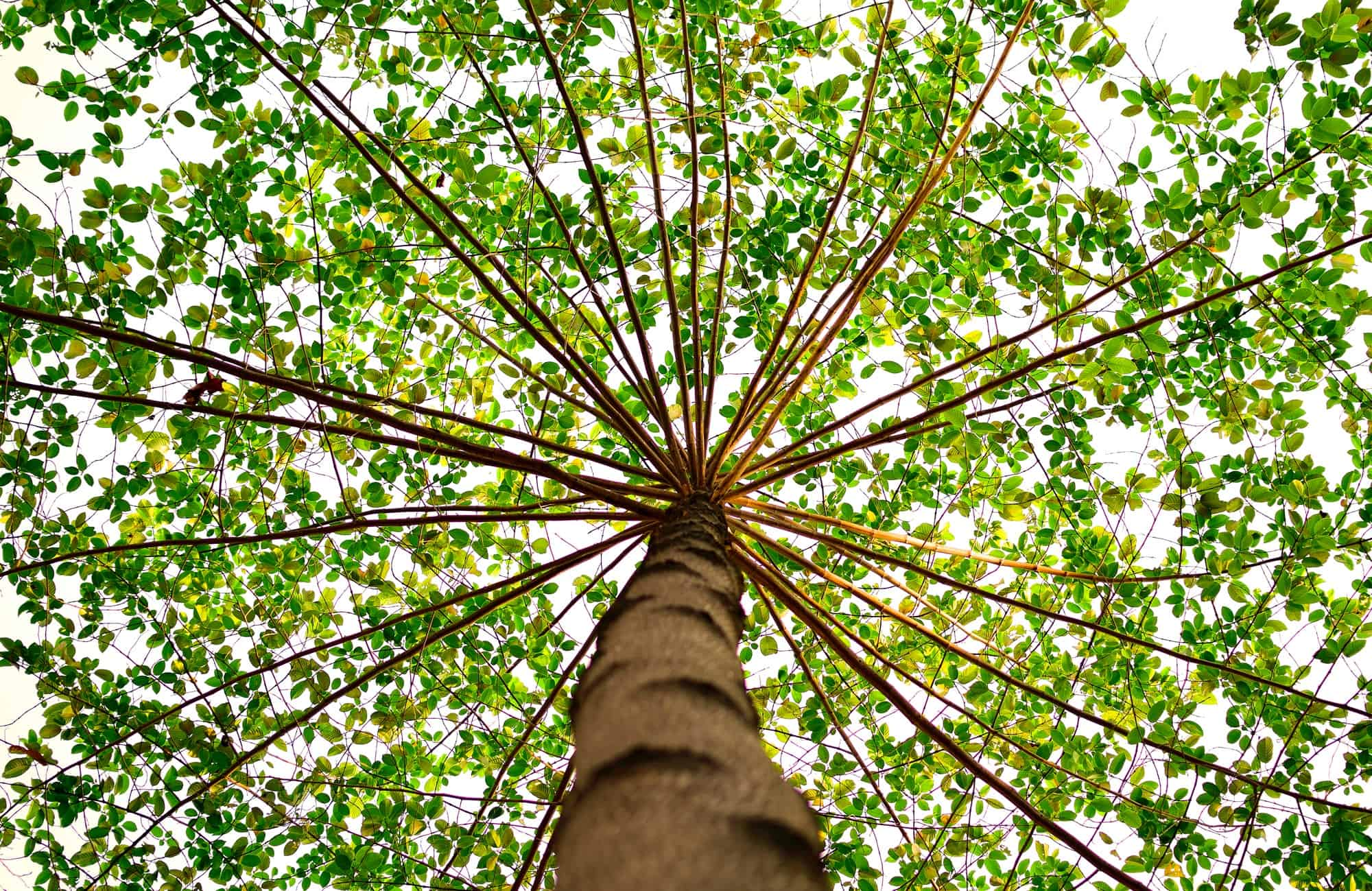 Image result for tree photo