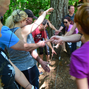 Team Building at Tree to Tree Adventure Park. The spider web challenge!